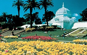 Golden Gate Park Flower Conservancy